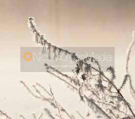 Hoar frost on branches and twigs in the morning sun