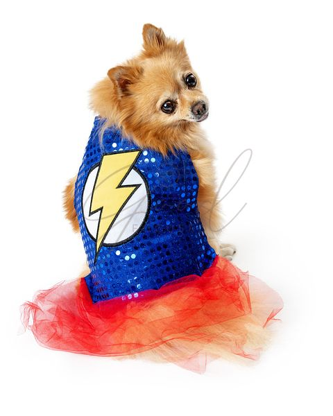 Female Dog Wearing Super Hero Costume
