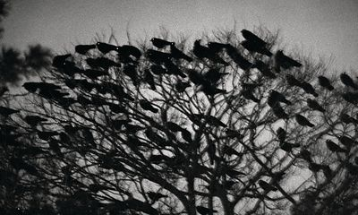 The Solitude of Ravens - Masahisa Fukase:  the best photobook of the past 25 years? Pictures