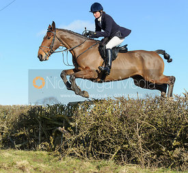 Tricia Ronane jumping a hedge near Knossington Spinney - The Cottesmore at Furze Hill.