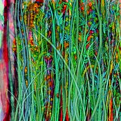 Qualia_s_Grass_Russell_Kightley