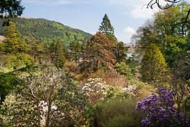 View from slope over rhododendrons and trees towards Loch Melfort