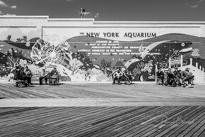The New York Aquarium