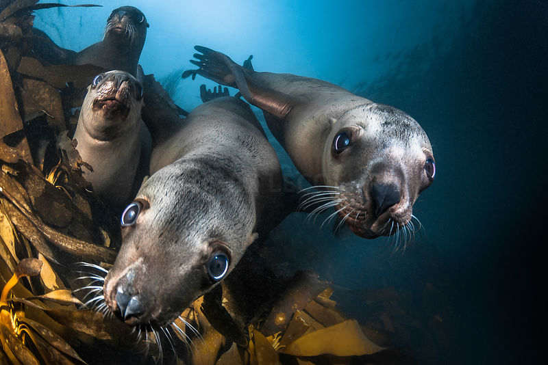 Sea Lion & Seal photos