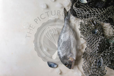 Raw sea bream fish