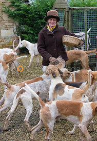 Cottesmore hounds keen to get to the food at the meet