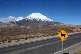 Llama crossing road sign next to Highway 11, Payachatas volcanos in background , Lauca National Park , Region XV , Chile