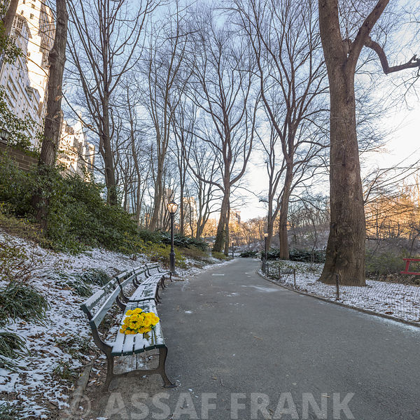 Assaf Frank Photography Licensing Bunch Of Yellow Flowers On Park