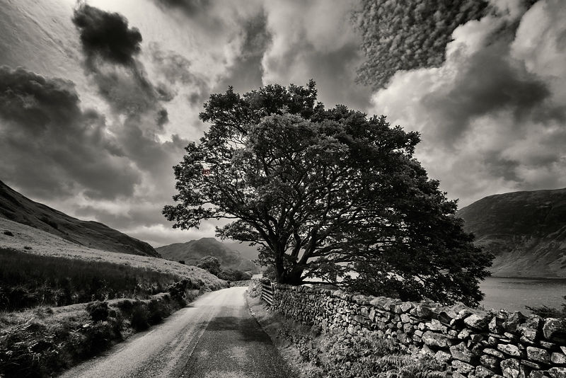 Drystone Wall and Tree near Crummock Water