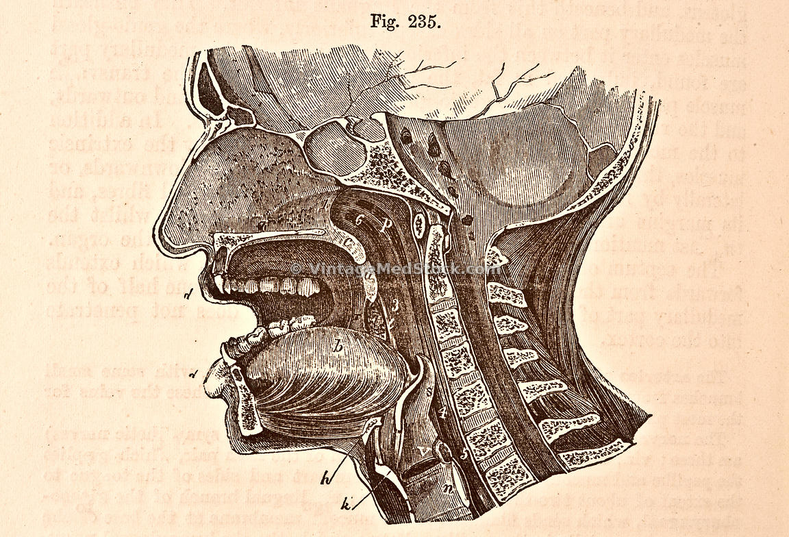 Antero-Posterior Vertical Section Through the Head