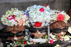 Skulls wearing sunglasses and crowns of flower petals with coca leaf offerings, Ñatitas festival, La Paz, Bolivia