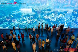 Dubai Mall aquarium, United Arab Emirates