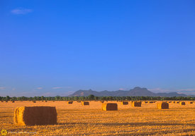 Baled Hay & Sutter Buttes #2