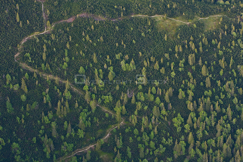Aerial view of path in mountain forest of Norway spruce (Picea abies) Mountain ash / Rowan (Sorbus aucuparia) and the Dwarf mountain pine (Pinus mugo) zone, Western Tatras, Carpathian Mountains, Slovakia, June 2009