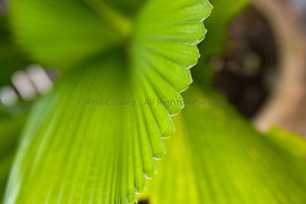 close up of ribbed leaf