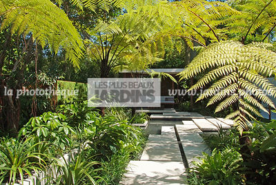 Asiatic garden, Contemporary garden, Exotic garden, Tropical garden, Malaysian garden, Tree Fern