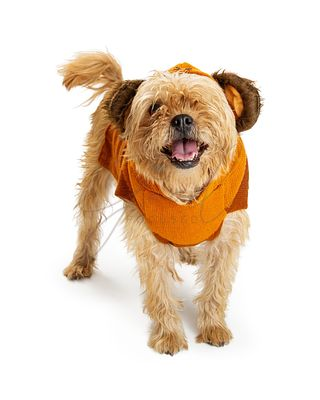 Dog Wearing Bear Halloween Costume