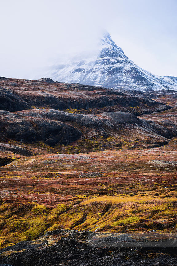 Snow-capped mountain on Disko Island in Greenland, with tundra in its autumn colours in the foreground