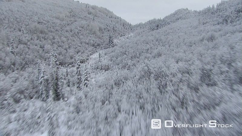 Flying through snowy, forested canyon in Alaska