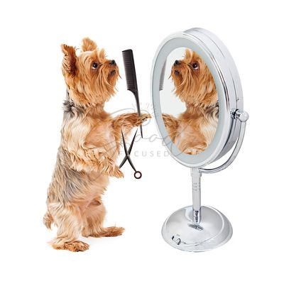 Dog Grooming Himself in Mirror