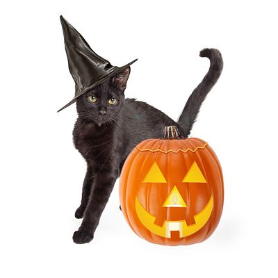 Halloween Black Cat With Carved Pumpkin