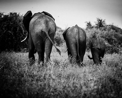 9261-Elephant-The_Dalton_Family_Laurent_Baheux