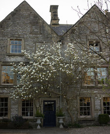 Magnolia tree at the Dower House (private) Winster