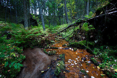 The Stream form the Kylmähauta Spring