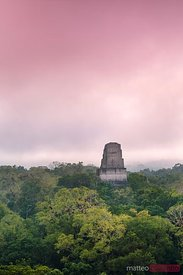 Elevated view of temple and forest at sunrise, Tikal, Guatemala