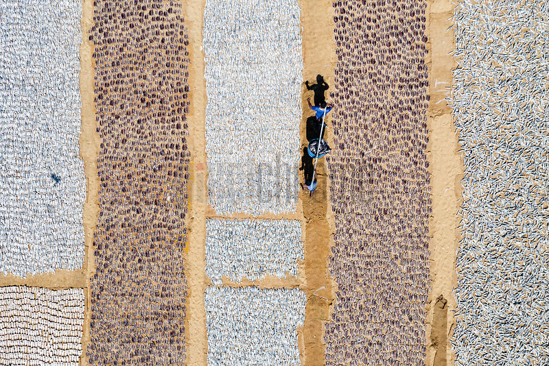 Men Carrying a Barrel of Fish through Fish Drying Area at Negombo Beach