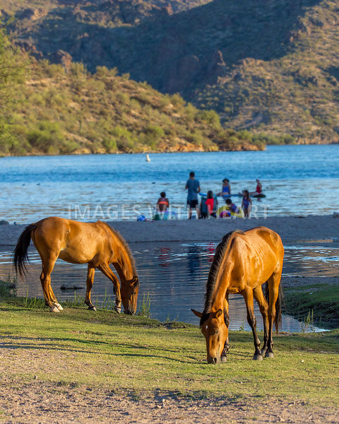 Wild Horses at Arizona River Recreation Site