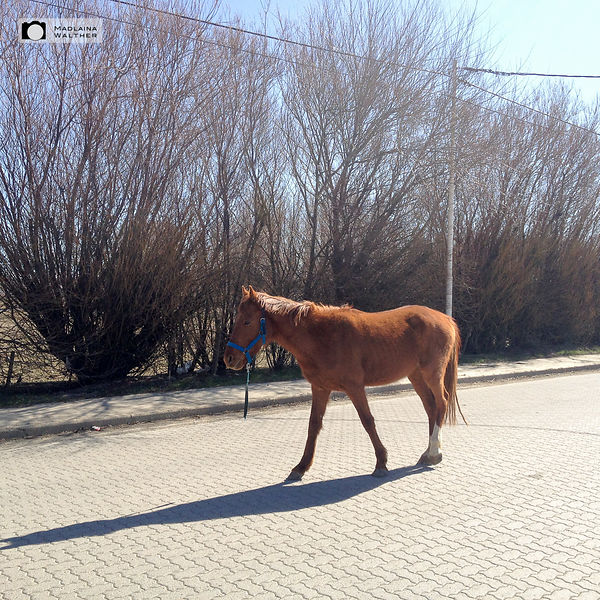 Sometimes also horses stroll in the streets...