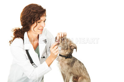 Dental Checkup By A Professional Veterinarian
