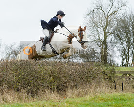 Kitty Taylor jumping a hedge by Puss's Bushes - The Cottesmore at The Fox and Hounds