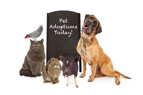 Pet Adoption Promotion large