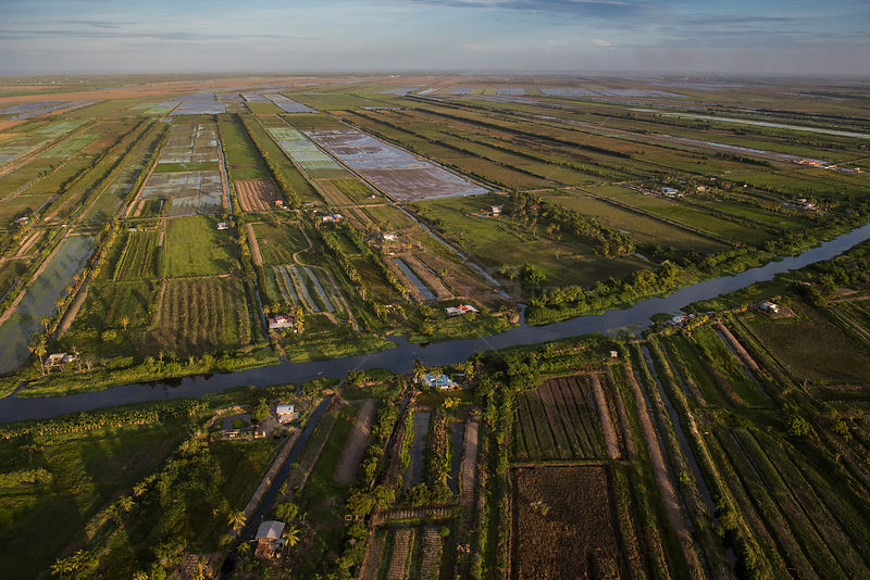 Aerial view of mixed agriculture fields of East Demerara Conservancy, east of Georgetown, Guyana, South America