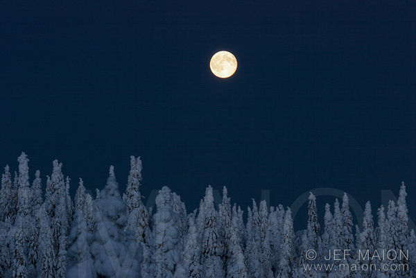 Christmas in Lapland images