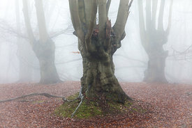 Three in the mist