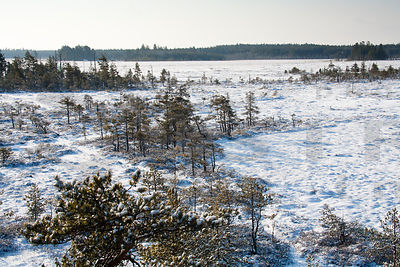 Mire in Valkmusa National Park
