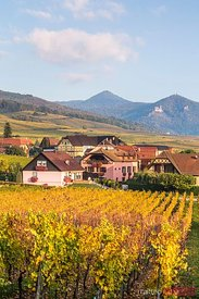 Vineyards and town of Hunawihr, Alsace, France