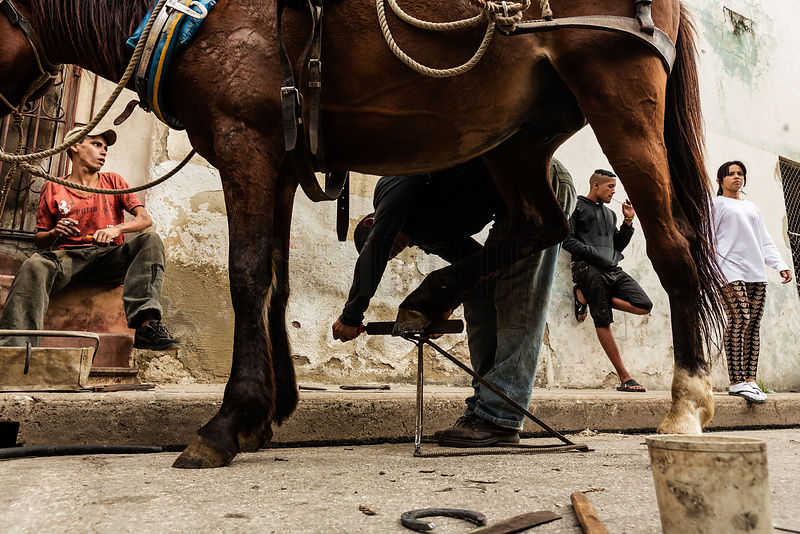 Man Replacing a Shoe on a Horse