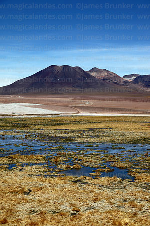 Bofedales above Machuca and Tatio volcano, Region II, Chile