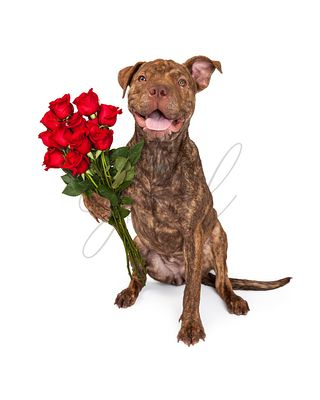 Happy Dog Holding A Dozen Roses