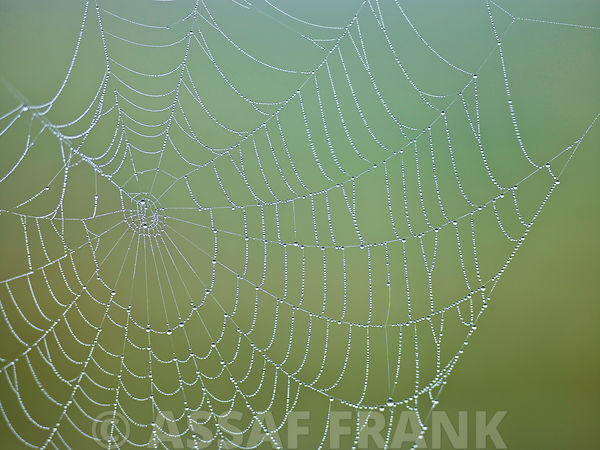 Spider Web photos