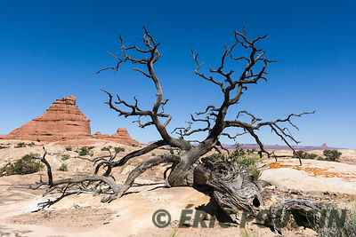parc national de canyonland photos