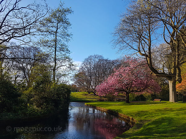 Sefton Park in Bloom
