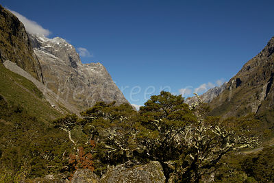 New-Zealand_South-Island-17