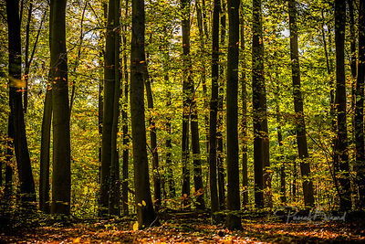 PBE-2012-10-28_-_Parc_de_Saint-Cloud-4515