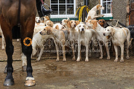 Quorn hounds - Quorn at Cold Newton 8-11-13