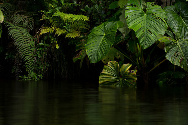 Black water deep in the rainforest